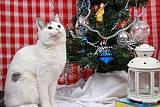 Кошка Лия